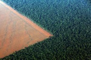 Meno foreste, più soia