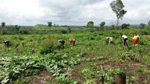 Bem Feito e Ourives: l'agribusiness visto dalla parte delle vittime