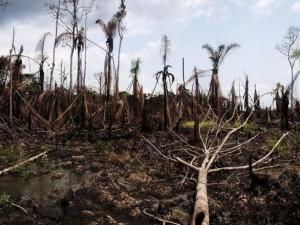 """""""Colpevoli di ecocidio"""", le responsabilità italiane nella deforestazione dell'Amazzonia"""